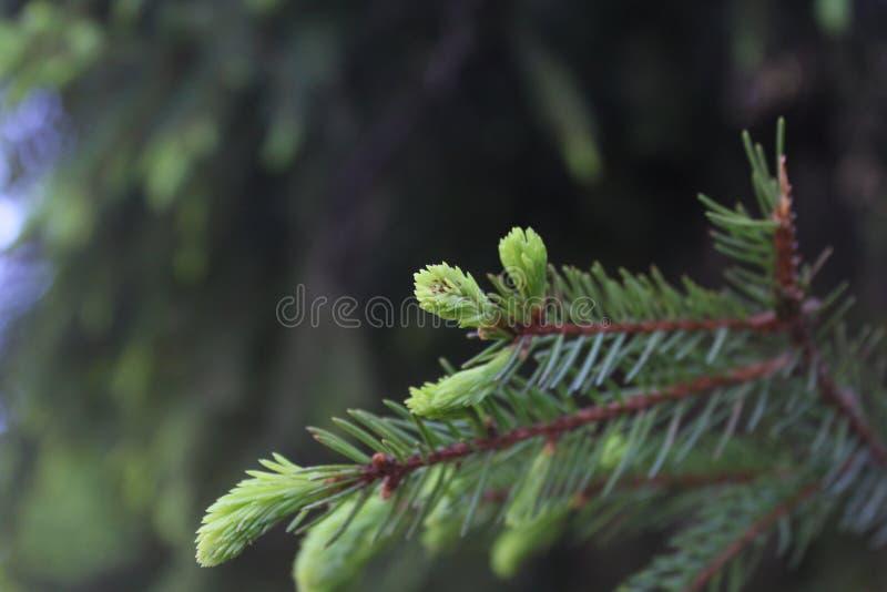 Zadziwiający drzewo zdjęcie stock