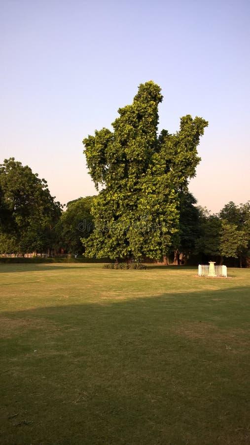 ZADZIWIAJĄCY drzewo PRZY DELHI obraz stock