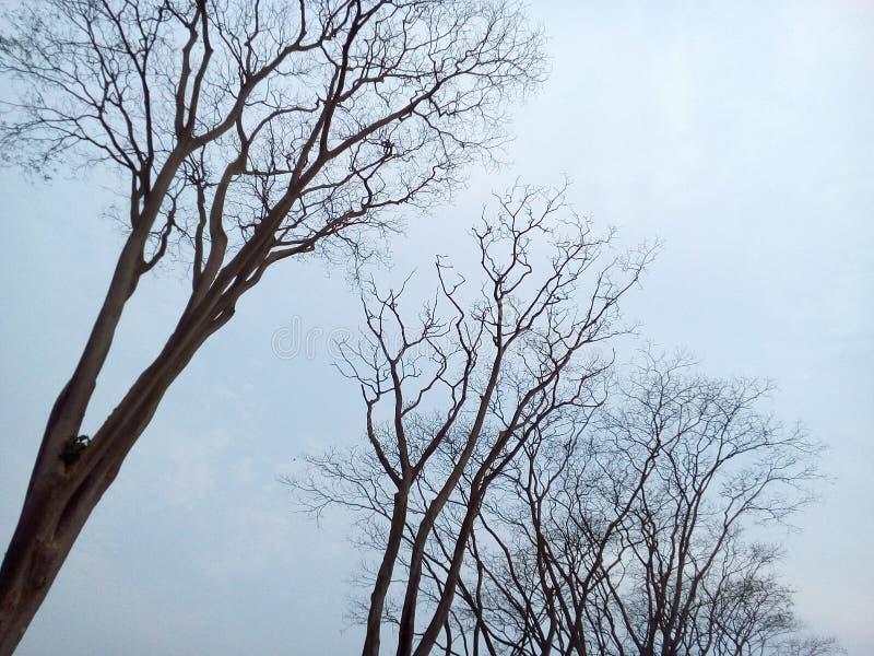 zadziwiający drzewo przy krajowym pomnikiem zdjęcia royalty free