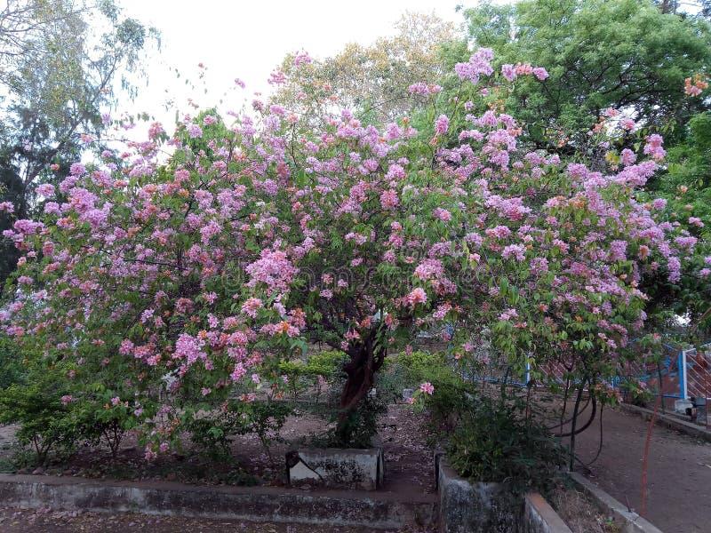ZADZIWIAJĄCY drzewo Z PIĘKNYMI kwiatami zdjęcie stock