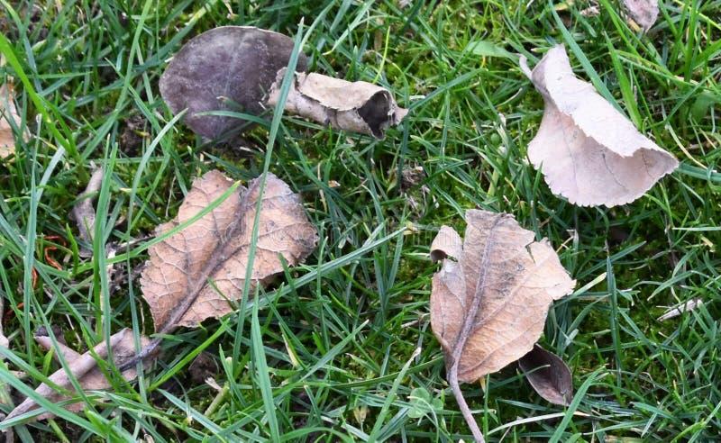 Zadziwiający jesień liście w trawie obraz stock