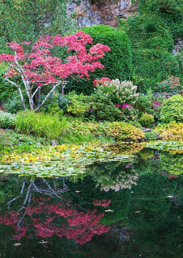 Zadziwiający krajobraz i kwiecisty park obraz stock
