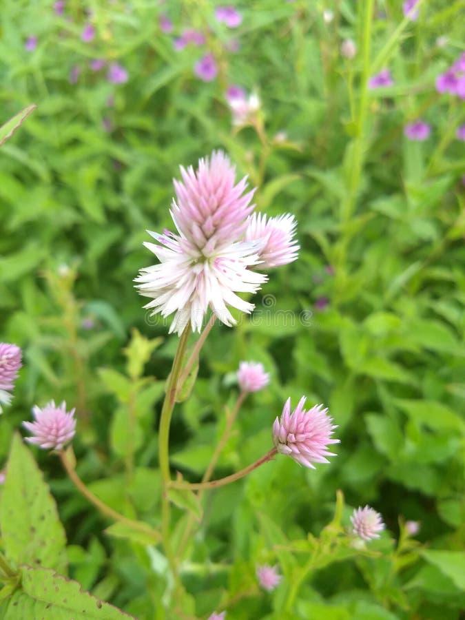 Zadziwiający kwiat obraz royalty free