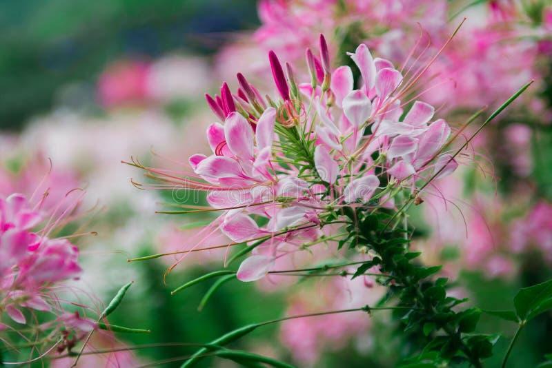 Zadziwiający kwiat w świacie fotografia stock
