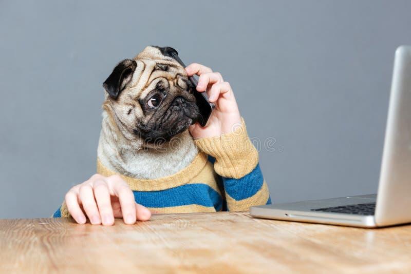 Zadziwiający mężczyzna z mops psią głową opowiada na telefonie komórkowym zdjęcia stock