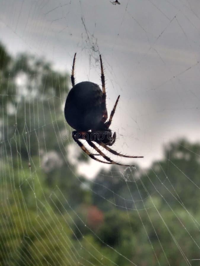 Zadziwiający pająk obrazy stock