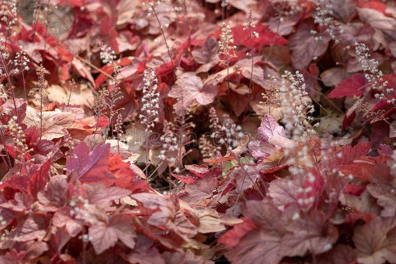 Zadziwiający pasmo jesień kolory obraz stock