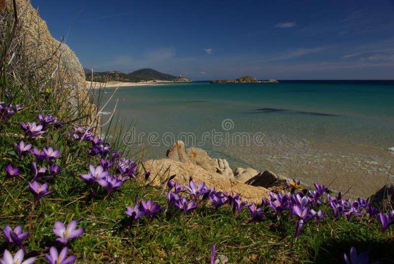 zadziwiający plażowy chia Sardinia widok obraz stock