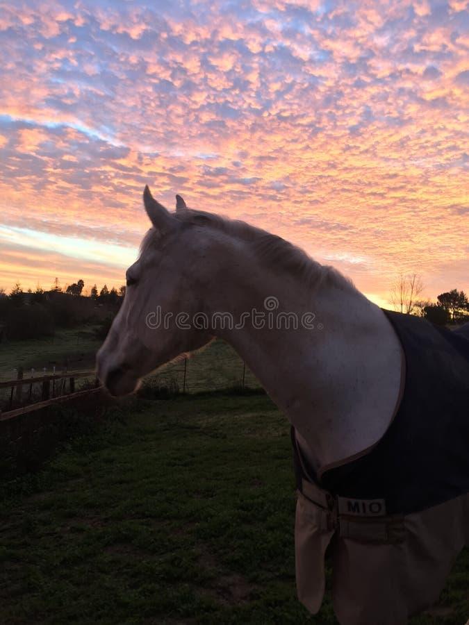 Zadziwiający różowy nieba wschód słońca z koniem jest ubranym koc obraz royalty free