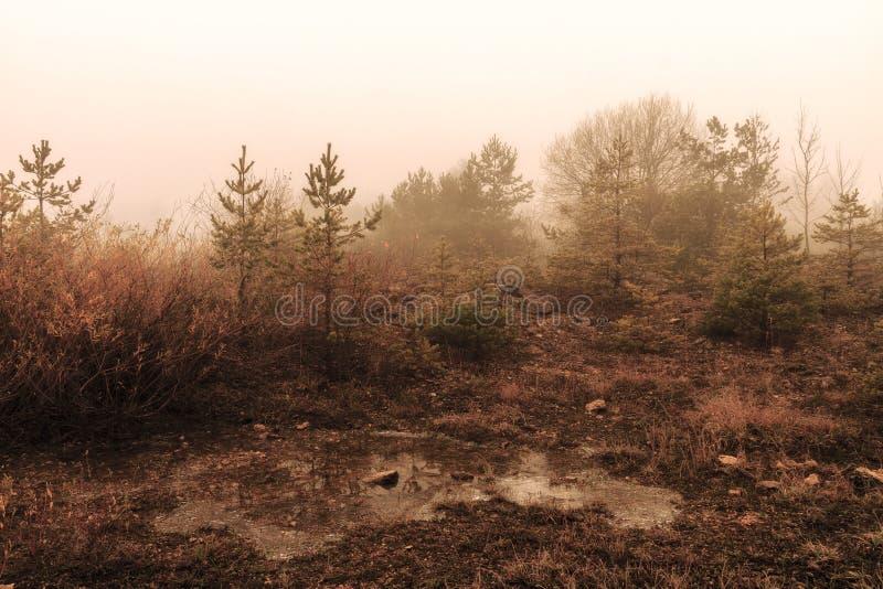 Zadziwiający Straszny zima krajobraz zdjęcia stock