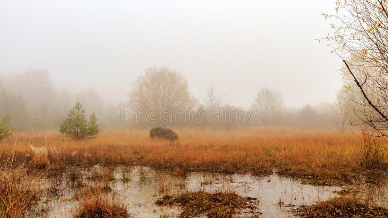 Zadziwiający Straszny zima krajobraz zdjęcia royalty free