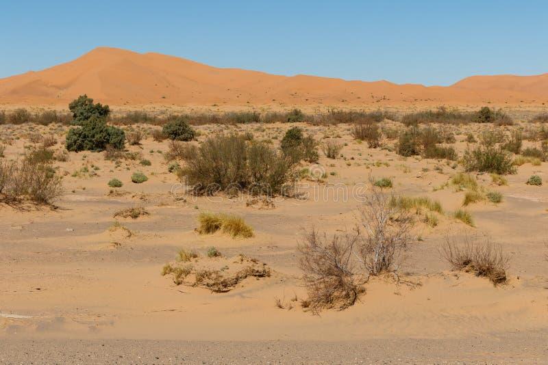 Zadziwiający widok wielkie piasek diuny w saharze, erg Chebbi, Merzouga, Maroko zdjęcia stock