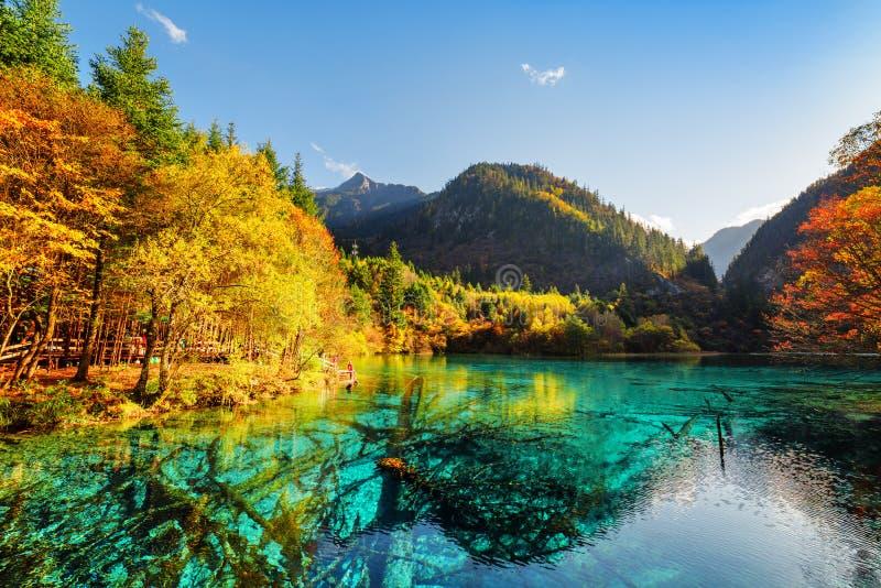 Zadziwiający widok zanurzający drzewni bagażniki w Pięć Kwiat jeziorze zdjęcie royalty free