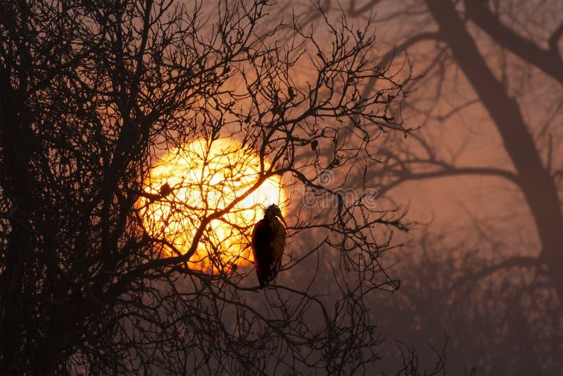 Zadziwiający wschód słońca przez zim drzew fotografia stock