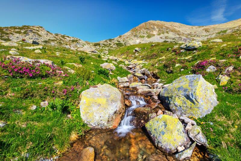 Zadziwiający wysokogórski miejsce z bulgocze strumyka i kolorowych kwiaty, Rumunia fotografia royalty free