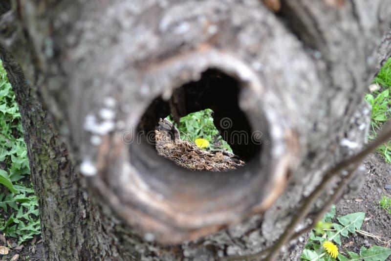 Zagłębienie w drzewie zobaczy jako kwiat zdjęcia stock