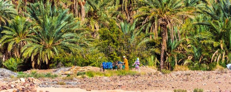 Zagora, Marocko - 12 november 2019: Människor och åsna i Draa Valley oasis royaltyfri foto