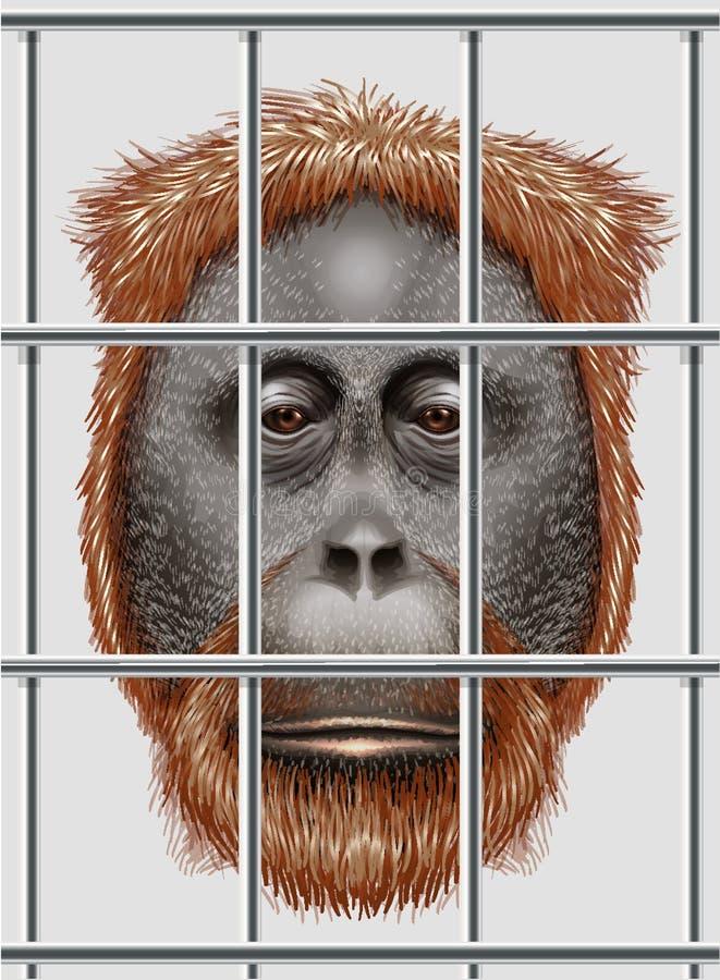 Zagrażający orangutan ilustracja wektor