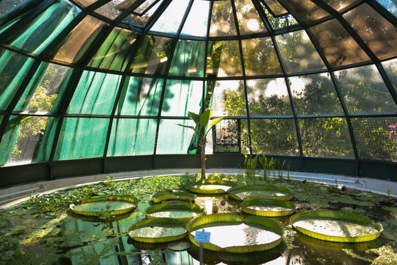 Zagreb botanical garden greenhouse. Croatian capital of Zagreb botanical garden greenhouse with water lily royalty free stock image