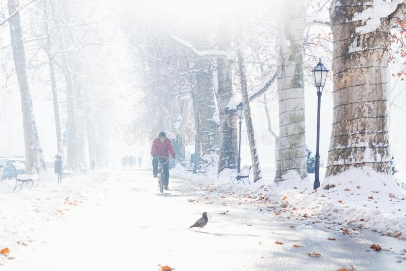 Zagreb, Croatia: January 7 2016: Biker on footpath with decorated trees and walkers in Zrinjevac Park in Zagreb in winter with sno royalty free stock image