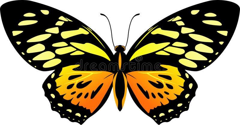 Zagreus trasero y anaranjado del vector de la mariposa de Papilio libre illustration