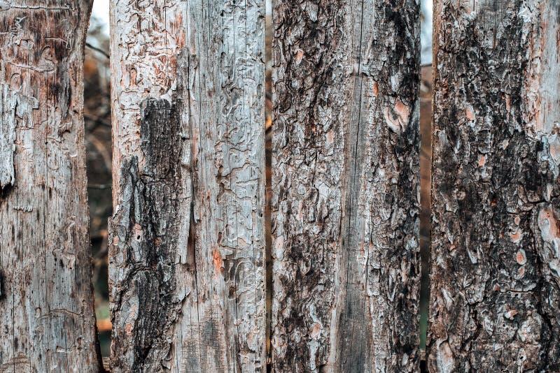 Zahl WanzenBorkenkäfer Alte graue Vorstände Hölzerner Hintergrund Ein Zaun an einem Herbsttag in der Natur Alte hölzerne Planken lizenzfreie stockbilder