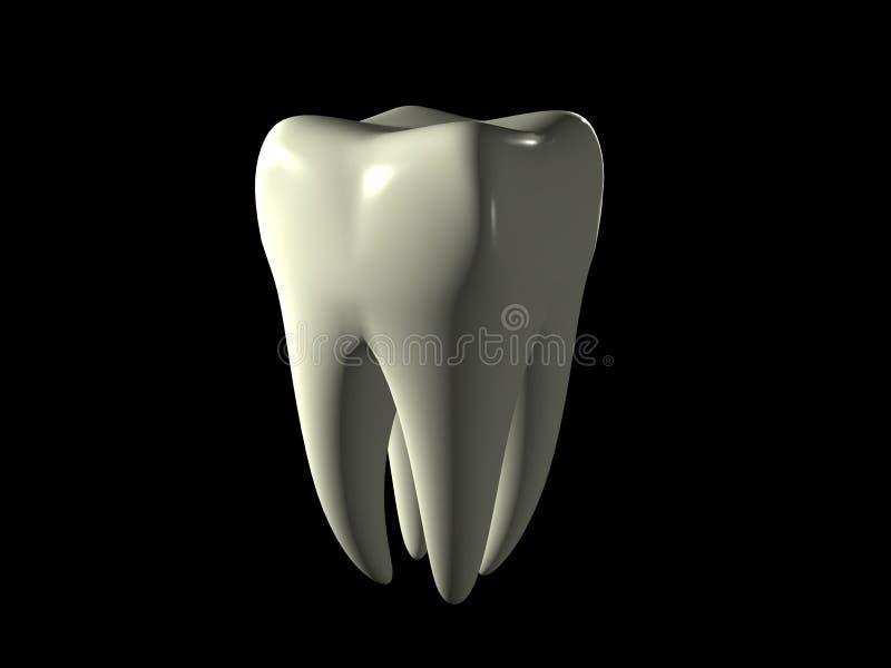 Zahn vektor abbildung