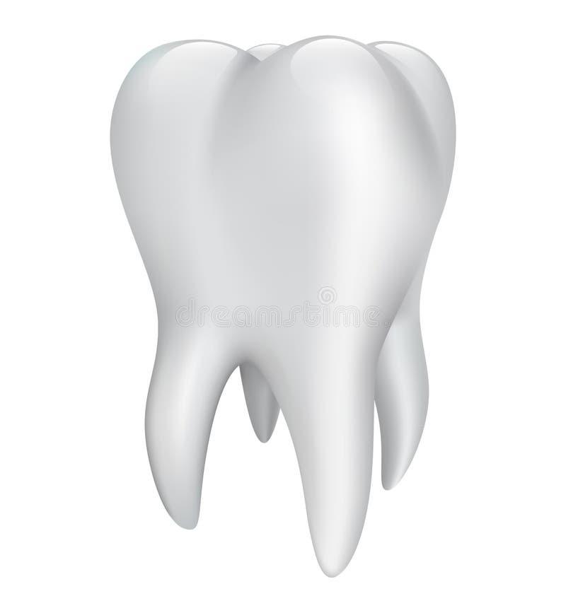 Zahn auf einem weißen Hintergrund. Vektorillustration vektor abbildung