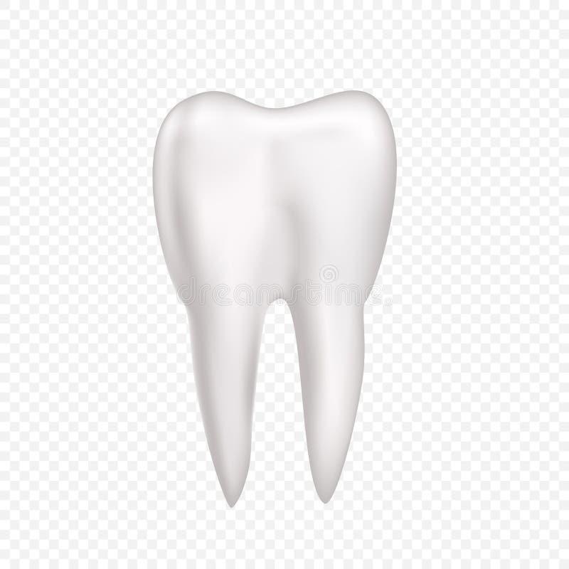 Erfreut Zahnanatomie Und Zahn Histologie Notizen Fotos - Anatomie ...