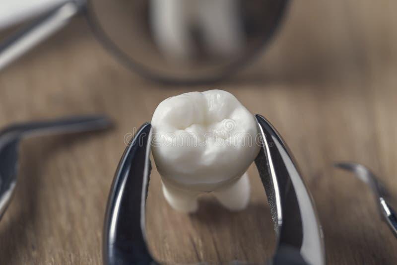 Zahn in der Zange auf dem Tisch stockfotografie