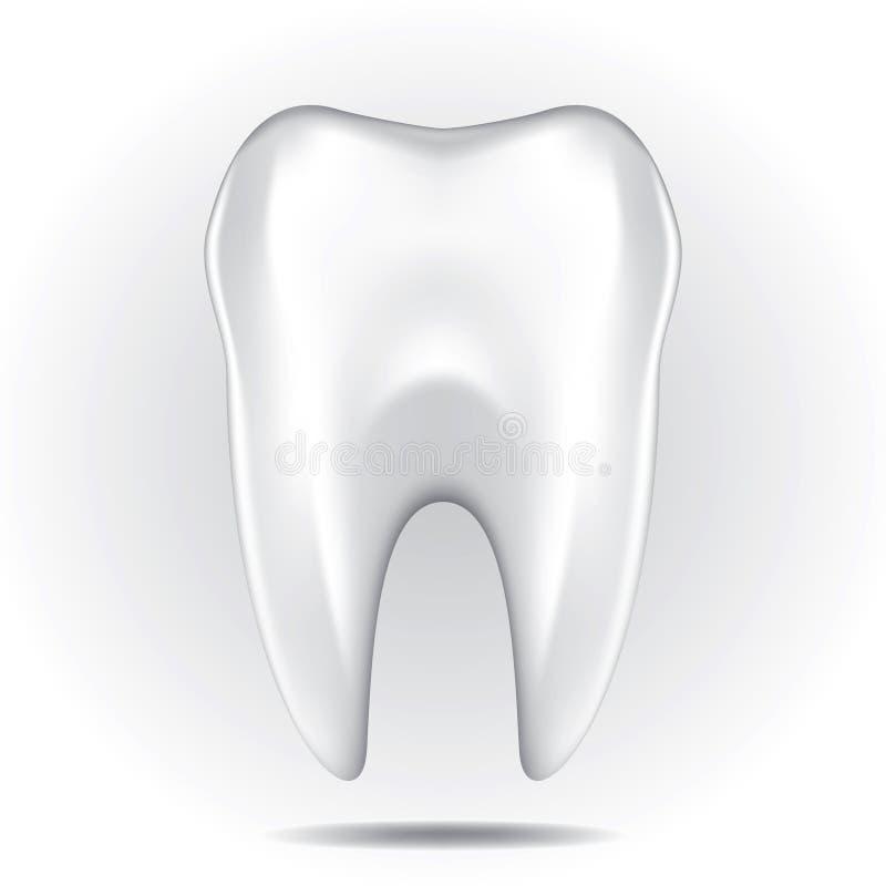 Zahn stellte 3 ein vektor abbildung