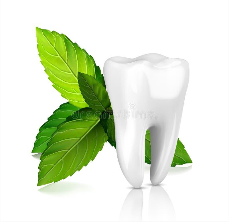 Zahnanzeigen, mit tadellosen Blättern weiß werden Grüne tadellose Blätter säubern neues Konzept stock abbildung