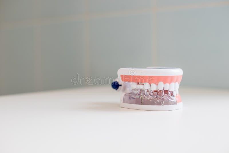 Zahnarzthelferüberprüfungskonzept Zahnmedizinischer Zahnzahnheilkundestudent, der unterrichtende vorbildliche Vertretungszähne, W stockbilder