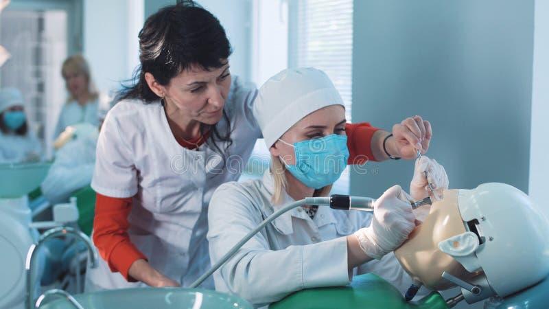 Zahnheilkundestudent oder -hygieniker, die an einer Attrappe arbeiten stockbilder