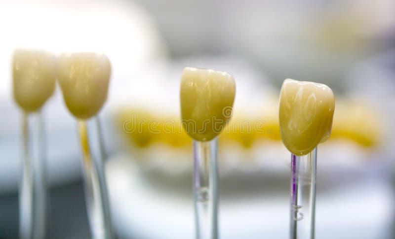 Zahnmedizinische Kronennahaufnahme lizenzfreie stockbilder
