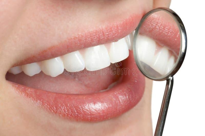 Zahnmedizinische Zähne lizenzfreie stockfotos