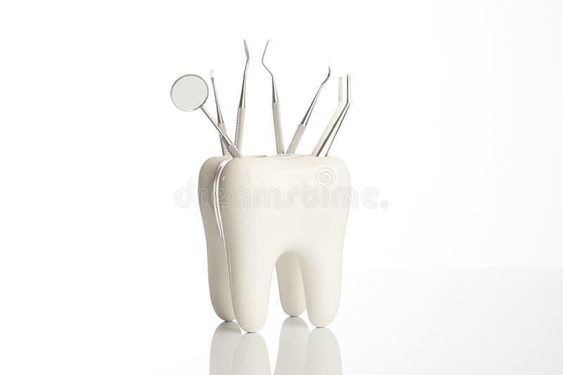 Zahnmodell mit Metallmedizinischen Zahnheilkunde-Ausrüstungswerkzeugen lizenzfreie stockbilder