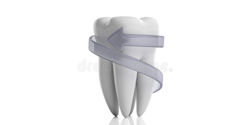 Zahnmodell und schützender Pfeil lokalisiert auf weißem Hintergrund Abbildung 3D lizenzfreie abbildung
