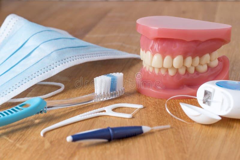 Zahnprothese mit Reinigungswerkzeugen stockbilder