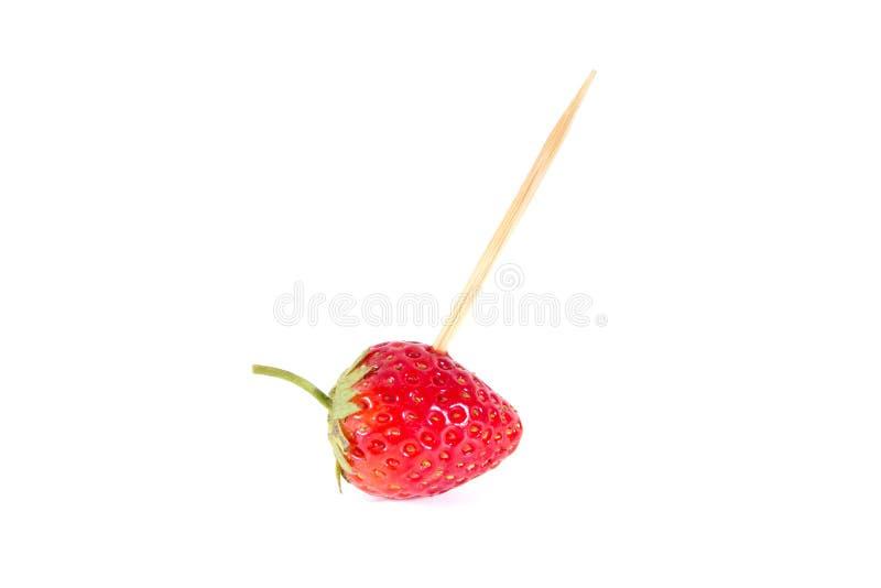 Zahnstocheraufsteckspindelnerdbeere lokalisiert auf weißem Hintergrundaussehung wie Cocktailnahrung lizenzfreies stockfoto