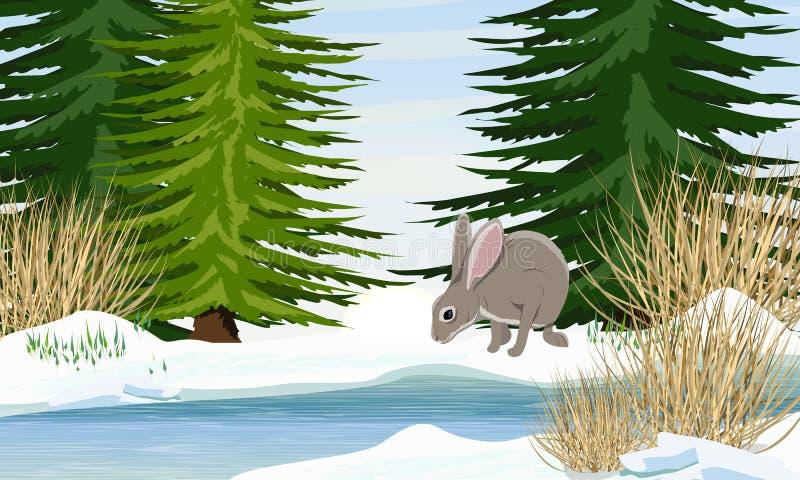 Zając na bankach rzeka w wiośnie Brzeg w śniegu, świerkowi drzewa, sucha trawa ilustracja wektor