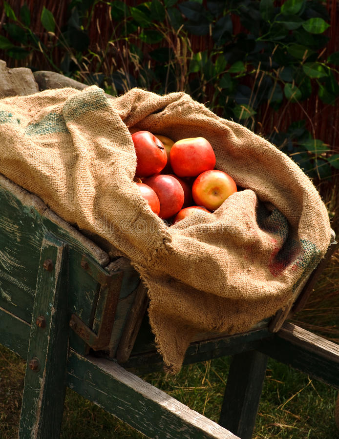 Zak van appelen in kruiwagen royalty-vrije stock foto's