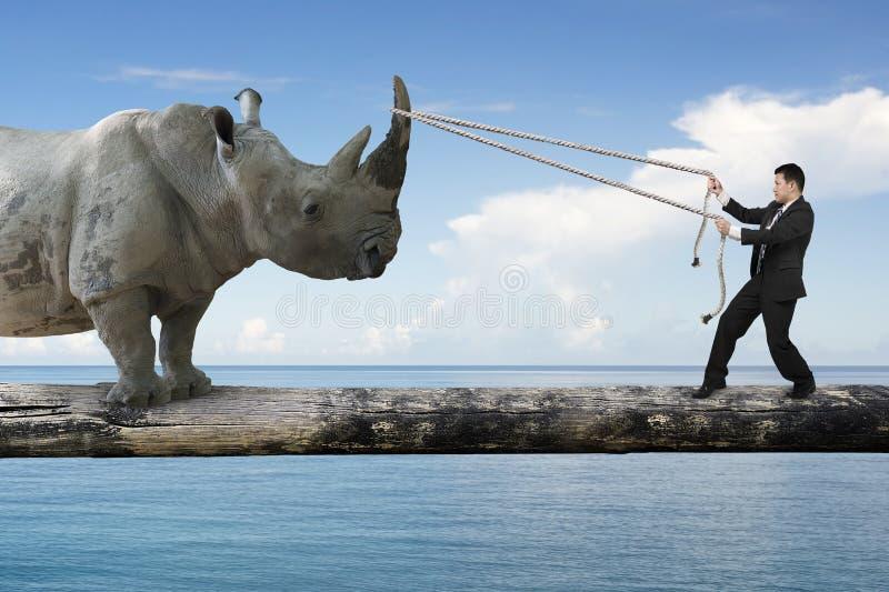 Zakenman die kabel trekken tegen rinoceros het in evenwicht brengen op boom RT royalty-vrije stock foto