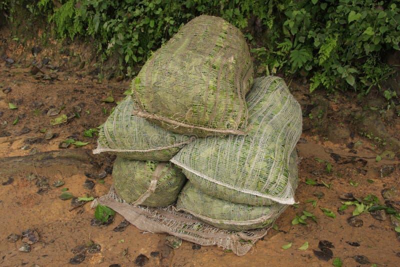 Zakken van de theeblaadjes van Ceylon, Sri Lanka stock afbeeldingen