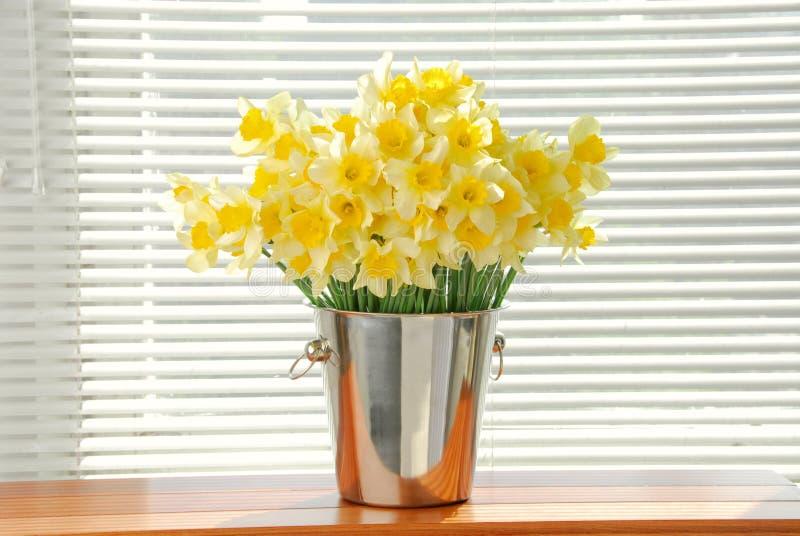 Zakończenie biały daffodil kwitnie, zna jako Paperwhite, narcyza papyraceus w zielonej trawy polu zdjęcia royalty free