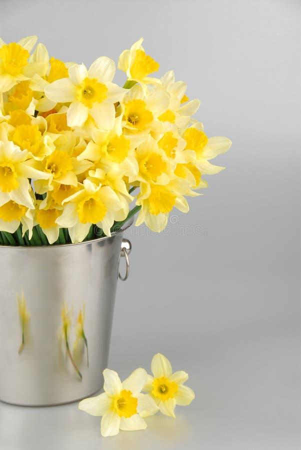 Zakończenie biały daffodil kwitnie, zna jako Paperwhite, narcyza papyraceus w zielonej trawy polu obrazy stock