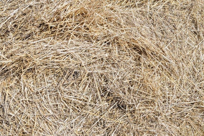 Zakończenia siana sucha żółta tekstura Naturalny słomiany tło Lata wiejski tło Copyspace obrazy royalty free