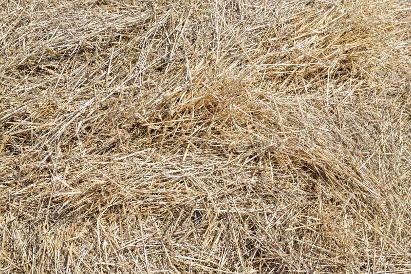 Zakończenia siana sucha żółta tekstura Naturalny słomiany tło Lata wiejski tło Copyspace obrazy stock