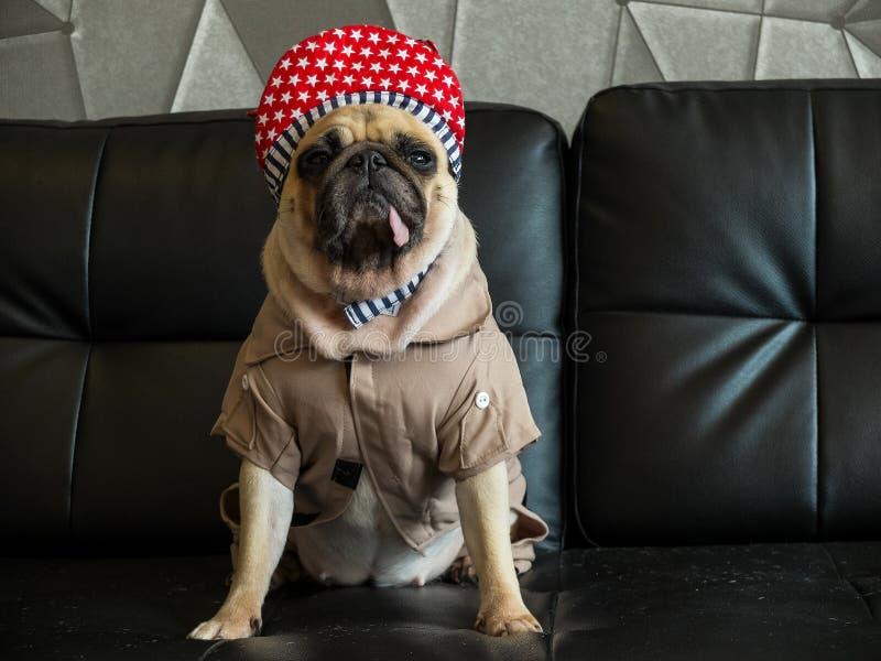 Zakończenie śliczny psi mops zanudzał z Hip Hop kapeluszem out na czarnej kanapie w izbowej spojrzenie stronie, jęzoru pacyfikato obraz stock
