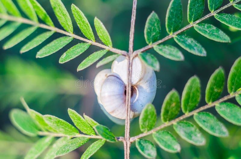 Zakończenie ślimaczek na gałąź roślina obraz stock